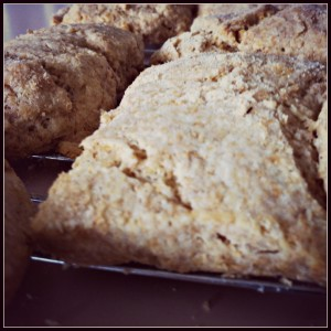sourdoughbutterbiscuits
