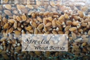 Sprouted Wheat Berries – a tutorial