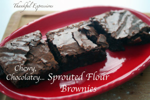Chewy, Chocolatey, Sprouted Flour Brownies