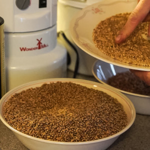 Sort through wheat berries for stones